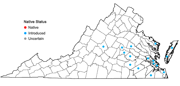Locations ofFacelis retusa (Lam.) Schultz-Bip. in Virginia