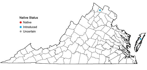 Locations ofFalcaria vulgaris Bernh. in Virginia