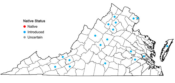 Locations ofFestuca trachyphylla (Hackell) Krajina in Virginia