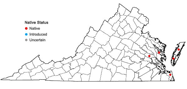 Locations ofFimbristylis caroliniana (Lam.) Fern. in Virginia