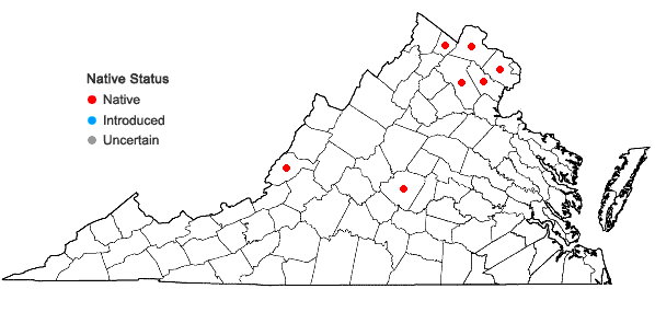 Locations ofFloerkea proserpinacoides Willd. in Virginia