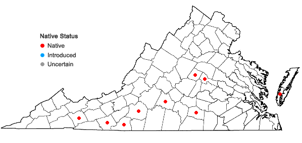 Locations ofFrullania eboracensis Gottsche ssp. virginica (Lehm.) R.M. Schust. in Virginia