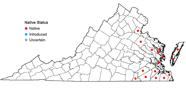Locations ofFuirena pumila (Torrey) Sprengel in Virginia