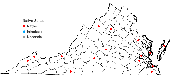 Locations ofFuscocephaloziopsis connivens (Dicks.) Vana & Södertsr. in Virginia