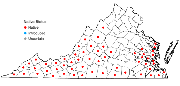 Locations ofGalax urceolata (Poir.) Brummitt in Virginia