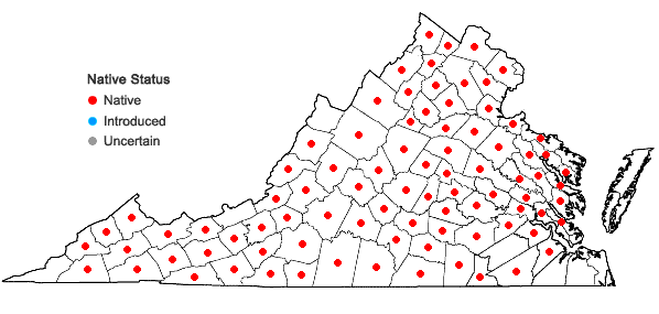 Locations ofGalearis spectabilis (L.) Raf. in Virginia