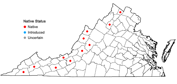 Locations ofGalium boreale L. in Virginia