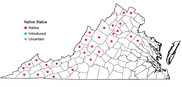 Locations ofGalium lanceolatum Torr. in Virginia
