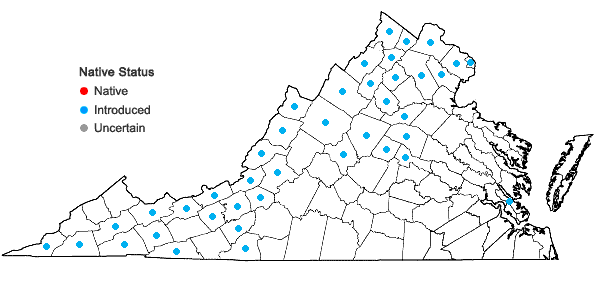 Locations ofGalium mollugo L. in Virginia