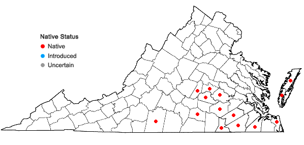 Locations ofGamochaeta calviceps (Fern.) Cabrera in Virginia
