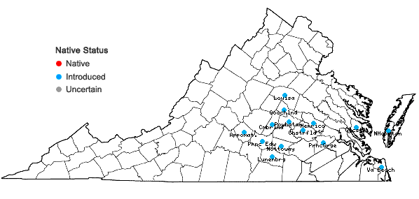 Locations ofGamochaeta coarctata (Willd.) Kerg. in Virginia