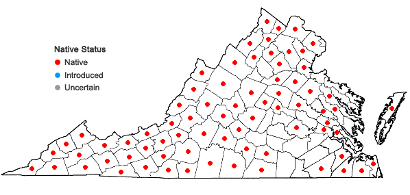 Locations ofGaultheria procumbens L. in Virginia