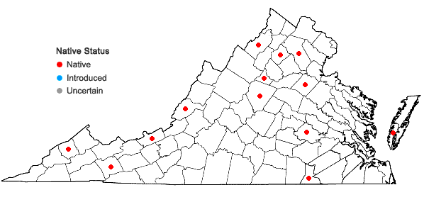 Locations ofGemmabryum caespiticium (Hedw.) J.R. Spence in Virginia