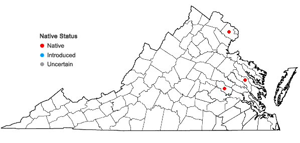 Locations ofGemmabryum subapiculatum (Hampe) J.R. Spence & H.P. Ramsay in Virginia