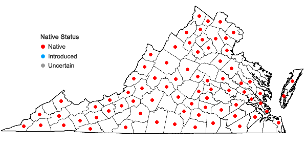 Locations ofGeum virginianum L. in Virginia