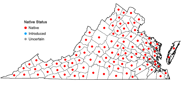 Locations ofGlyceria striata (Lam.) A.S. Hitchc. in Virginia
