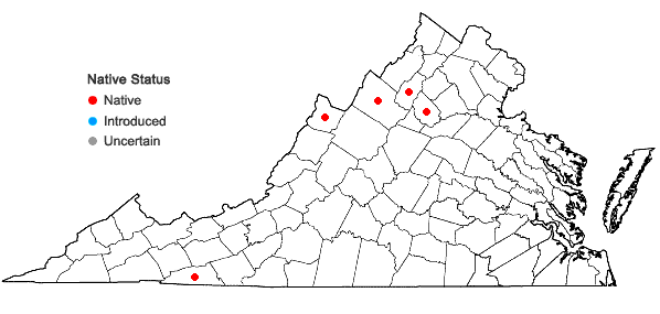 Locations ofGnaphalium uliginosum L. in Virginia