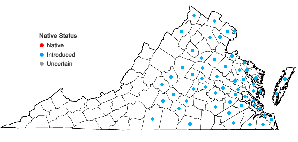 Locations ofHedera helix L. in Virginia