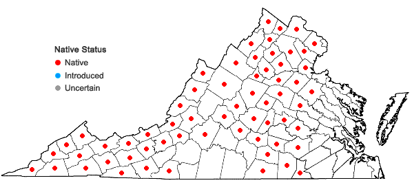 Locations ofHedwigia ciliata (Hedw.) P. Beauv. in Virginia