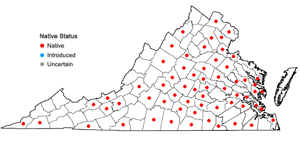 Locations ofHelenium flexuosum Raf. in Virginia