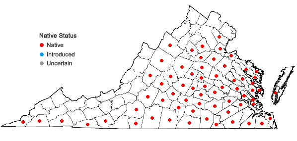 Locations ofHelianthus atrorubens L. in Virginia