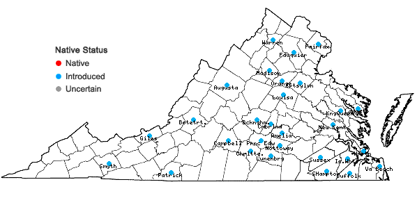 Locations ofHelianthus laetiflorus Pers. in Virginia