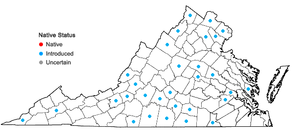 Locations ofHelianthus maximiliani Schrad. in Virginia