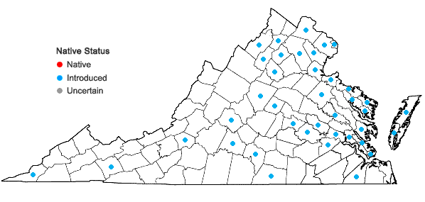 Locations ofHibiscus syriacus L. in Virginia