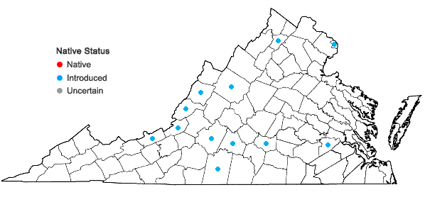 Locations ofHieracium piloselloides Vill. in Virginia
