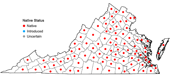 Locations ofHieracium venosum L. in Virginia