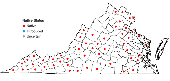 Locations ofHomalosorus pycnocarpos (Spreng.) Pichi-Sermolli in Virginia