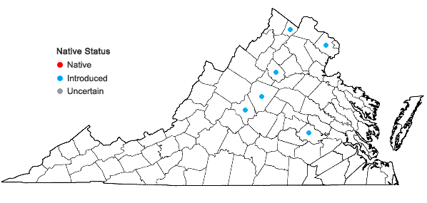 Locations ofHosta ventricosa (Salisb.) Stearn in Virginia