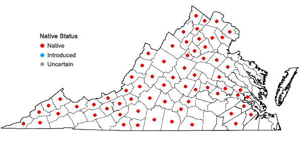 Locations ofHoustonia longifolia Gaertn. in Virginia