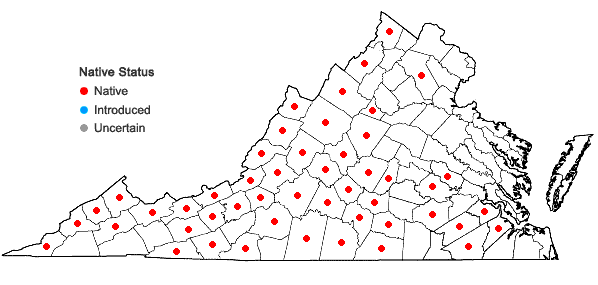 Locations ofHoustonia tenuifolia Nuttall in Virginia