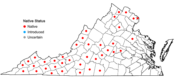 Locations ofHydrophyllum canadense L. in Virginia