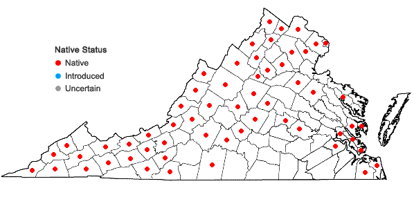 Locations ofHylodesmum glutinosum (Muhl. ex Willld.) H. Ohashi & R.R. Mill in Virginia