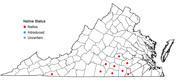 Locations ofHypericum virgatum Lam. in Virginia