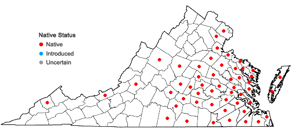 Locations ofHypericum walteri Gmelin in Virginia