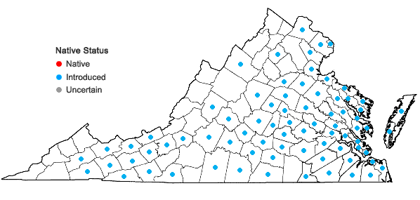 Locations ofHypochaeris radicata L. in Virginia