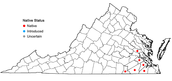 Locations ofHypoxis curtisii Rose in Virginia