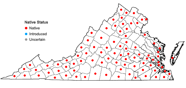 Locations ofHypoxis hirsuta (L.) Coville in Virginia
