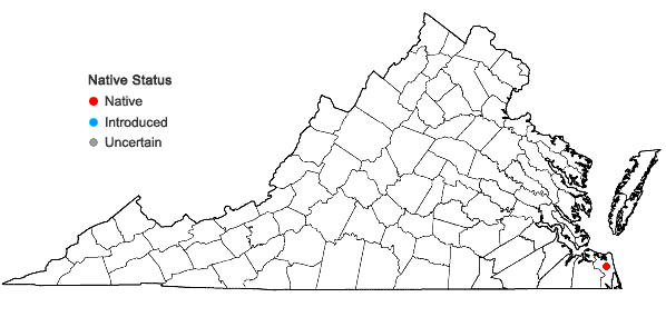 Locations ofHypoxis sessilis L. in Virginia