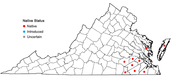 Locations ofHypoxis wrightii (Baker) Brackett in Virginia