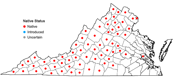 Locations ofImpatiens pallida Nuttall in Virginia