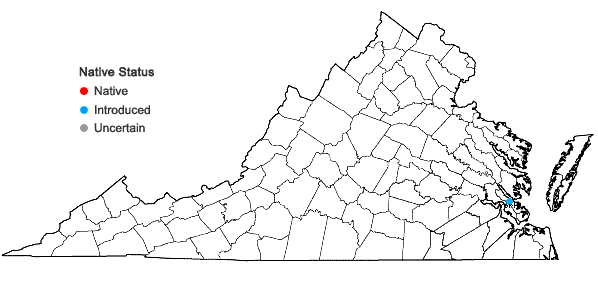 Locations ofImperata cylindrica (L.) Beauv. in Virginia