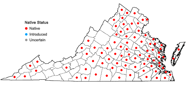 Locations ofIpomoea lacunosa L. in Virginia