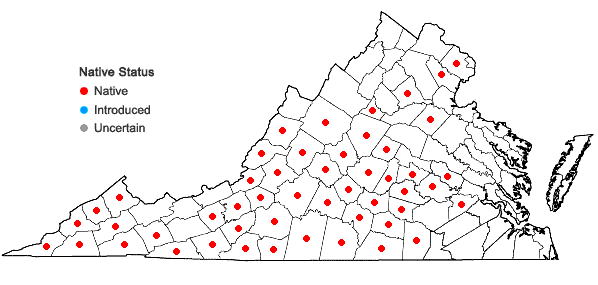Locations ofIris cristata Solander ex Aiton in Virginia