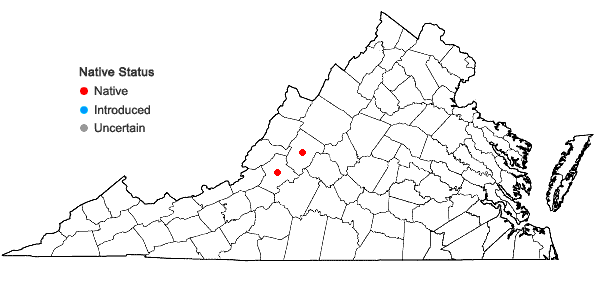 Locations ofIsoetes × altonharvillii Musselman & Bray in Virginia