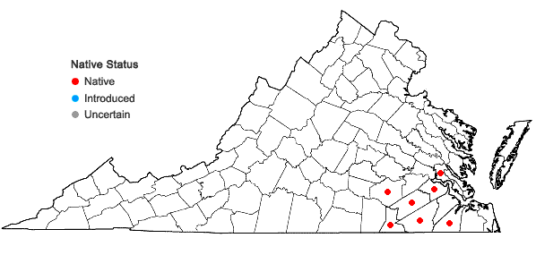 Locations ofIsoetes × bruntonii Knepper & Musselman in Virginia