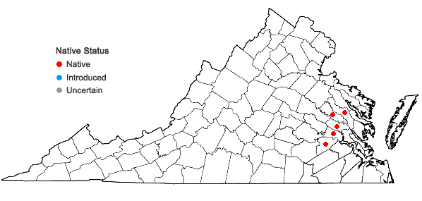 Locations ofIsoetes mattaponica Musselman & W.C. Taylor in Virginia